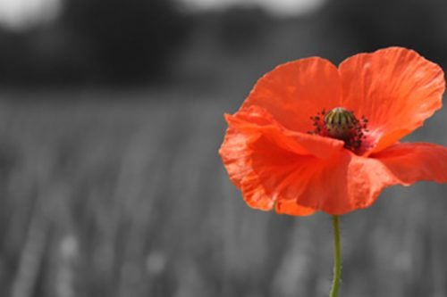 Remembrance Sunday: Wars and Insurrections